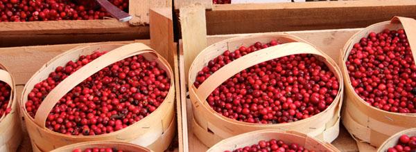 Die Cranberries - echt leckeres Superfood