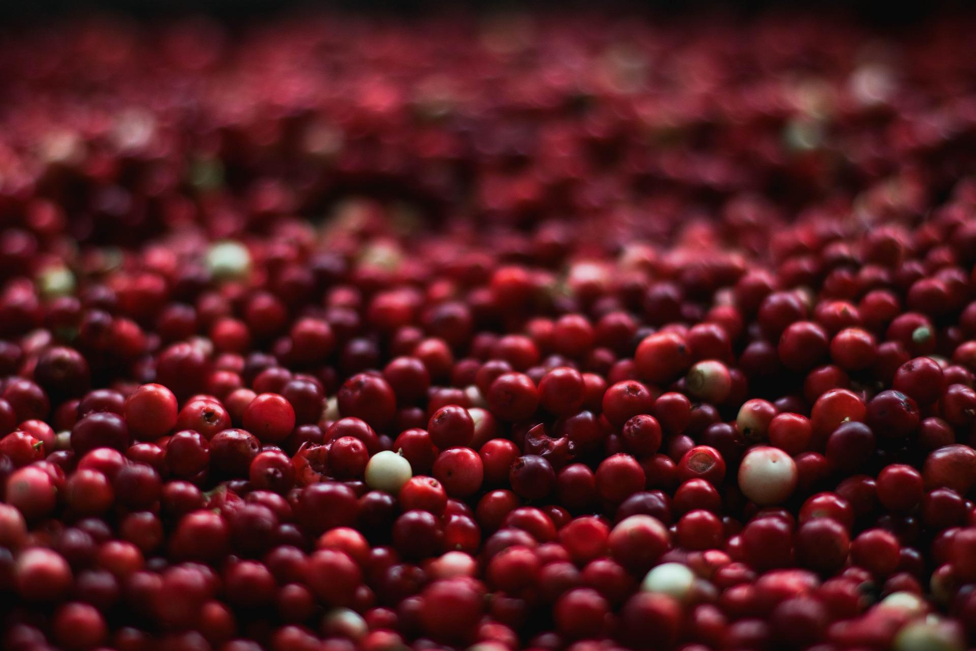 """#3 Cranberries – """"Wunderbeere"""" mit Sprungkraft"""