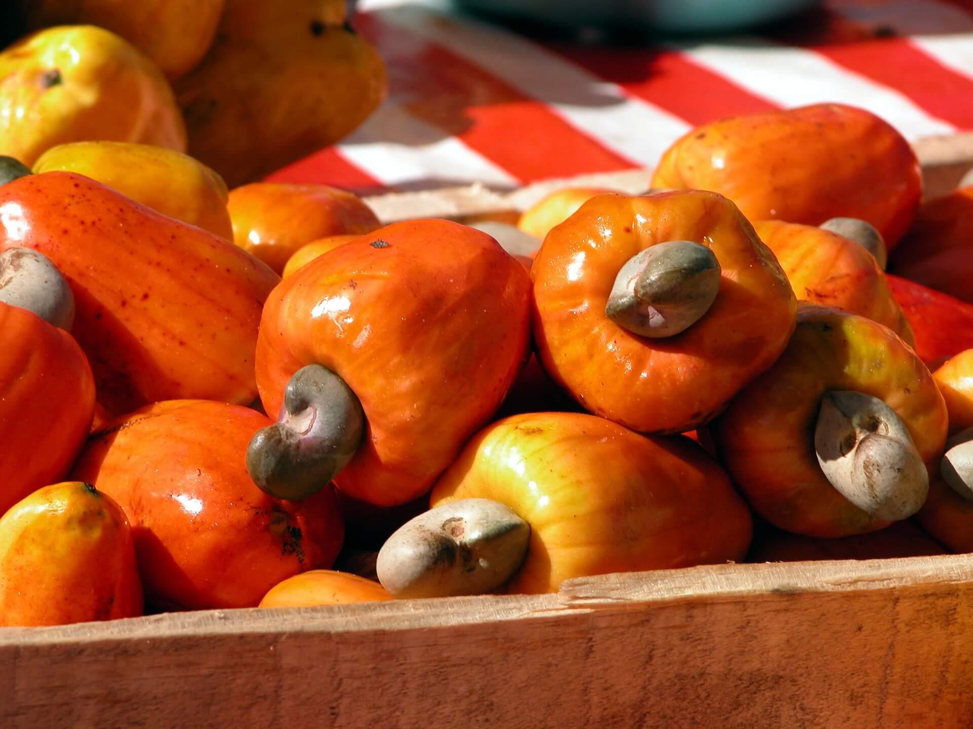 Cashewapfel - nierenförmige Früchte